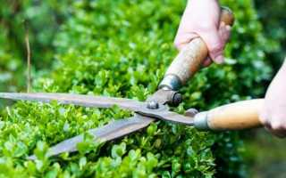 Кусторез: фото, разновидности ручных электрических садовых ножниц
