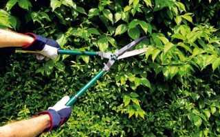 Как выбрать садовый кусторез: советы и рекомендации