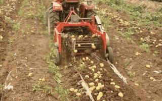 Картофелекопалка для минитрактора — виды, изготовление, видео