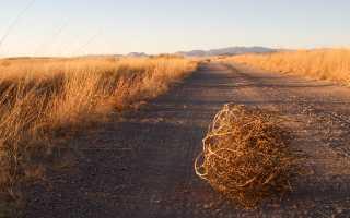Сельхозтехника для животноводчества