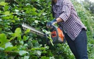 Кусторезы для обработки кустарников и деревьев
